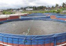 kolam terpal bioflok