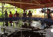 kolam-lele-bioflok-ciampea-bogor