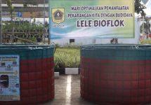 kolam bioflok bogor ciampea